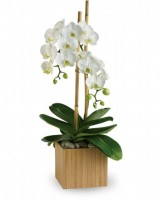 Artistic-Flowers-Lake-Oswego-Portland-Vancouver-Delivery-Orchid-Plant