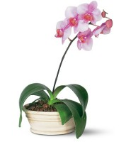 Artistic-Flowers-Lake-Oswego-Portland-Vancouver-Deliver-Phalaenopsis-Orchid